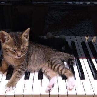 急募:保護猫ちゃん生後7週ぐらいキジシロくんの家族を探して…