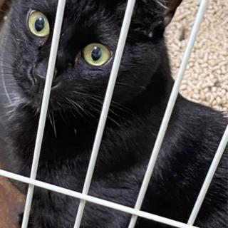 人懐っこい黒猫の里親募集 - 里親募集
