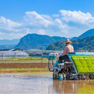 【ネット決済】[お米30Kg] 栃木県産コシヒカリ 令和2年度収穫