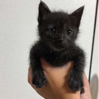 黒猫女の子1ヶ月半