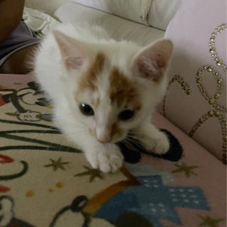 人懐っこい生後2か月くらいの子猫