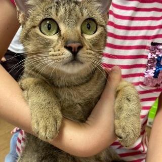 キジトラ美人猫さん