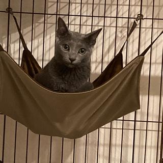 【猫用ゲージ2段】【ハンモックつき】ウッドワン サークル キャット 2段タイプ - 売ります・あげます