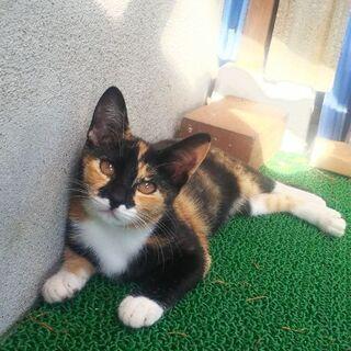 親離れ間近の子猫の里親さん募集します。