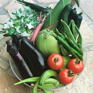 美味しい秋茄子🍆珍しいバターナッツかぼちゃなと お野菜10種セッ...