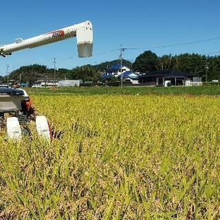新米🍚豊コシヒカリ 玄米30㎏ 2021年9月収穫