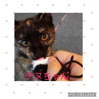 【個別面会可能】可愛いサビ猫ちゃん