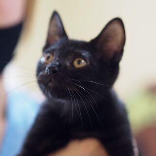 綺麗な黒猫ヘーゼル君