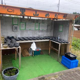 【ネット決済】メダカ•タマミジンコ 里山めだか無人販売所 9/26出店