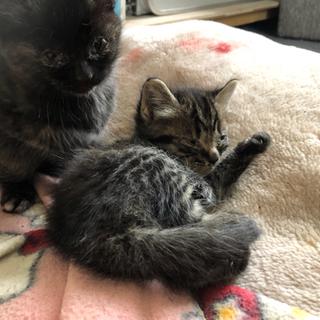 生後1か月→子猫黒
