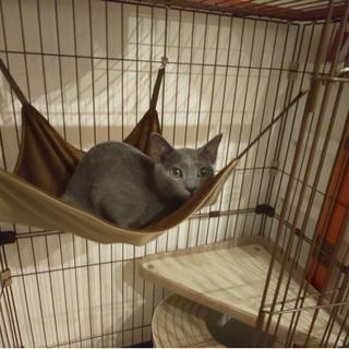 【猫用ゲージ2段】【ハンモックつき】ウッドワン サークル キャット 2段タイプの画像