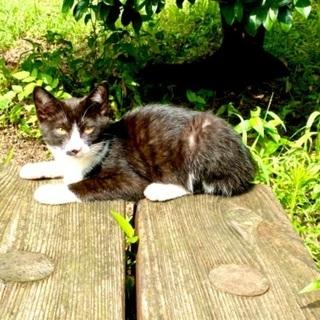 推定5・6ヶ月の子猫3兄弟の里親になってニャン