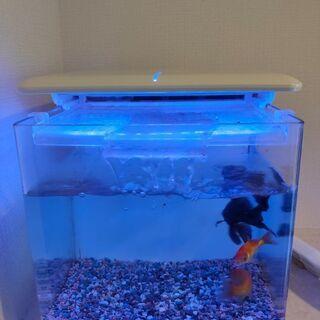 金魚入り水槽