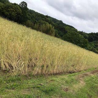 水稲栽培しませんか。