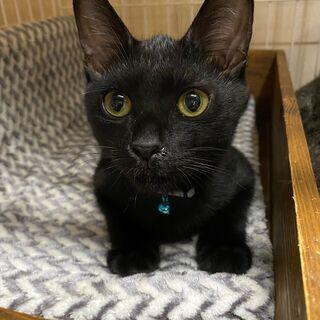 カギしっぽ黒猫 美男子ゼロ君