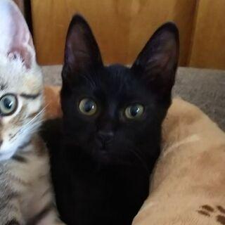 黒の子猫♀