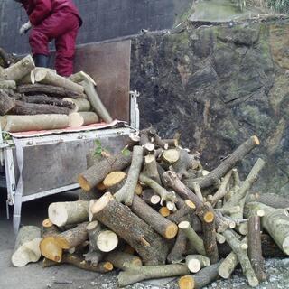 庭木.植木.生垣.伐採/伐根/抜根 承ります。遠賀郡:鞍手郡:宗...