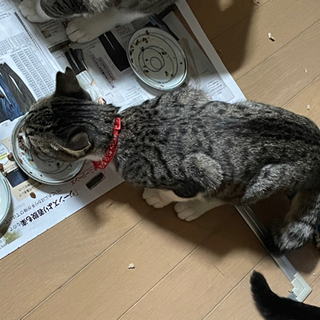 保護猫の親子 − 山梨県