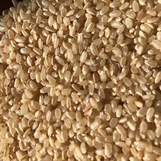 2020年度産 ヒノヒカリ玄米 20kg