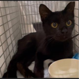 子猫みたいな野良黒猫ちゃん