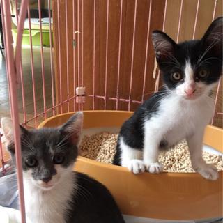 保護猫ちゃん2匹の里親様募集中です!