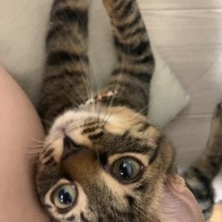 生後5ヶ月の虎猫