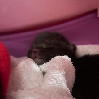 黒猫赤ちゃん2匹保護してます