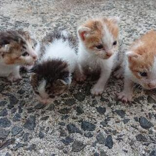 急募  令和3年9月7日産まれの4兄弟です。