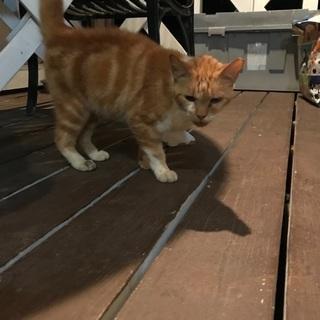 保護猫です。里親よろしくお願いします。