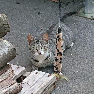代理投稿 保護猫里親募集