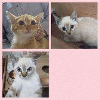 ★里親様✨募集致します★子猫(川沿)3匹