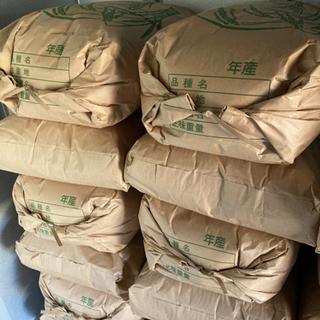 無消毒 無農薬 和歌山県産 新米 キヌムスメ 30kg 30キロ 玄米