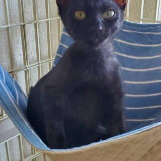 人なつっこいかわいい黒猫 ミンティーちゃん