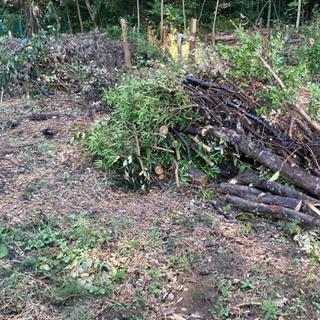 伐採木 枝木 薪などにいかがですか   0円