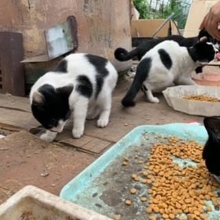 猫ちゃんたちの飼い主募集