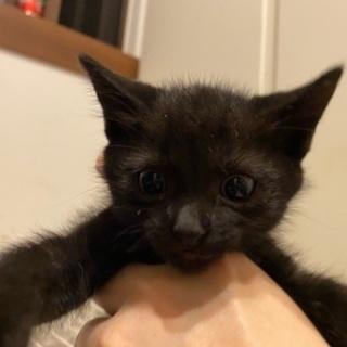 黒い仔猫里親募集中