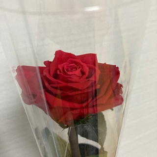 プリザーブドフラワー バラ 薔薇 1輪 ローズ 1本