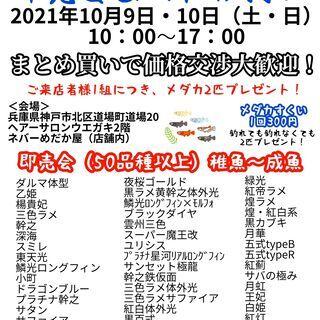 メダカすくいイベント2021年10月9日10日(土・日)恒例!即...