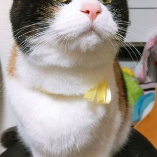 miroからのお知らせ2021100601(看板猫)