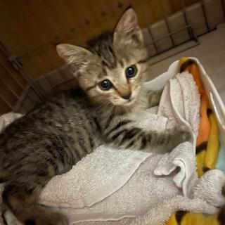 生後2ヶ月の仔猫ちゃんです。よろしくお願いします。