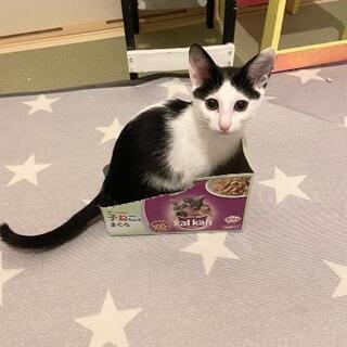 人懐っこい黒白の子猫
