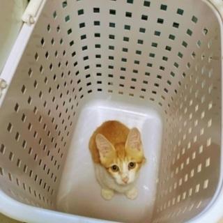 2か月のメス猫と推定4ヶ月のオス猫(届出済み)