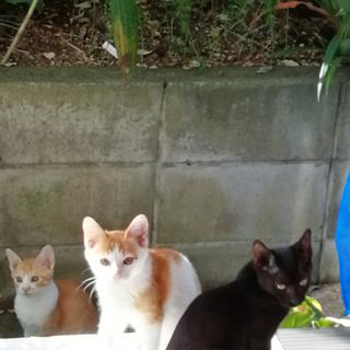 美猫3兄妹🐱応募ストップします。