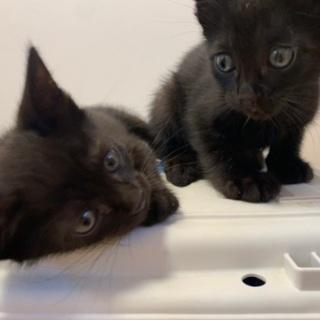 かわいい黒い子猫たちの里親様募集