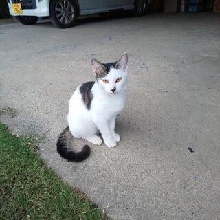 1歳未満の美人猫さん