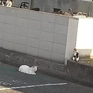 18匹の捕獲した子の為に猫用餌、シーツ、猫砂、トイレ、その…