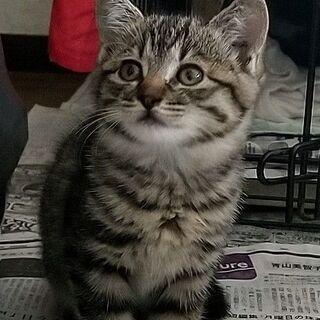野良猫(8月13日生まれ)の子猫3匹