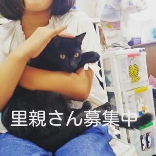 生後半年くらいの黒猫(メス)