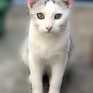 猫ちゃんの里親さん募集しています!