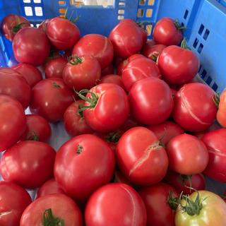 【ネット決済】わけありトマト
